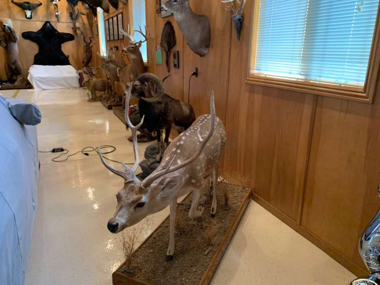 July 24th (Wednesday) - Chuck Pedrotte Lifetime Collection of Trophy Mounts