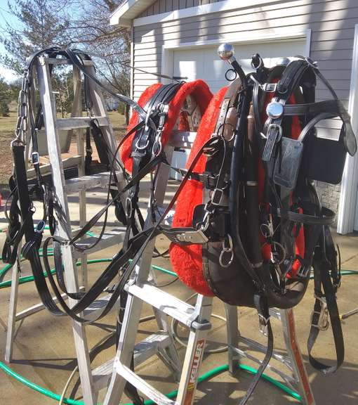 "Bio Draft Horse Team Harnesses with Bridles, Bits, 36"" Adjustable Collars, Pads and Lines, Nice Condition"