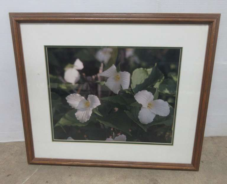 Trillium Flower Photo Picture, Custom Framed