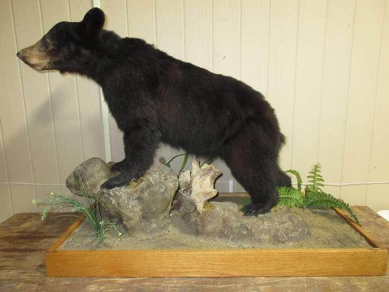 Full Body Bear Mount on Base