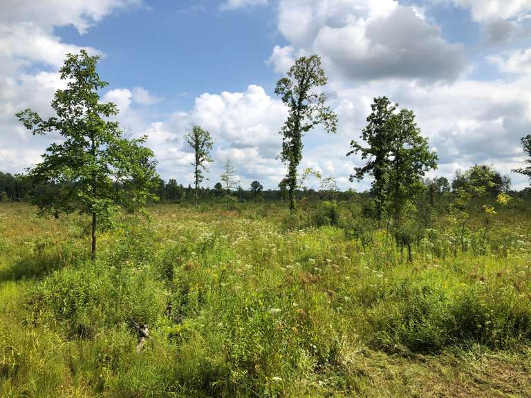 80 Acres +/- of Prime Hunting Property