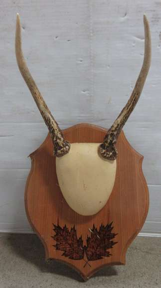 Two-Point Antler Mount