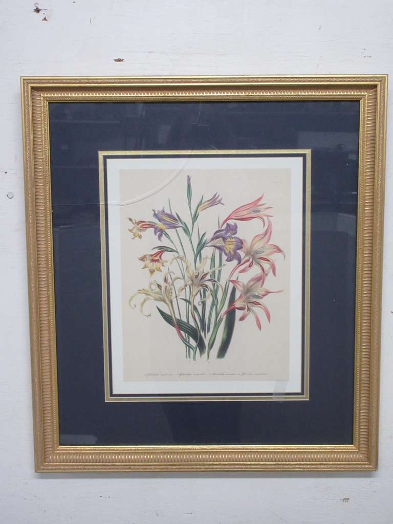 Botanical French Gladiolus Flower Art in a Detailed Gilt Gold Frame